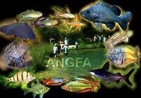 ANGFA CONVENTION 2009