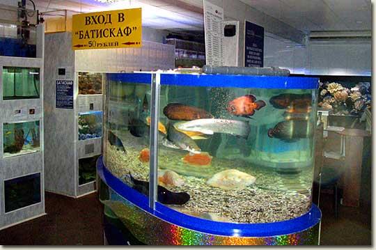 Aquarium shop in moscow aquapress bleher for Rundes aquarium