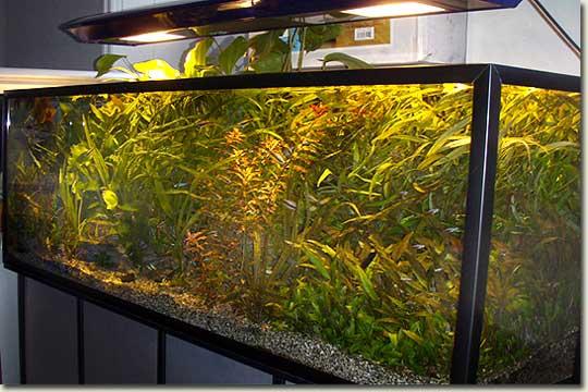 Aquarium Shop in Moscow – Aquapress – Bleher