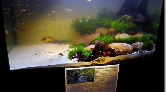Interzoo 2008 – Biotope 4