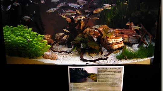 Interzoo 2008 – Biotope 7