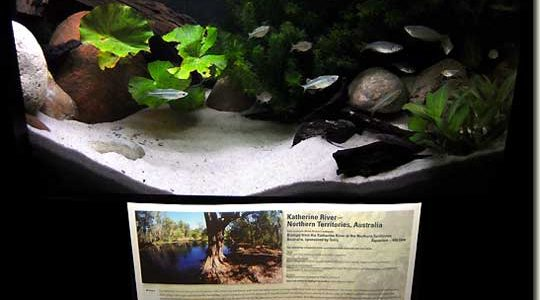 Interzoo 2008 – Biotope 9
