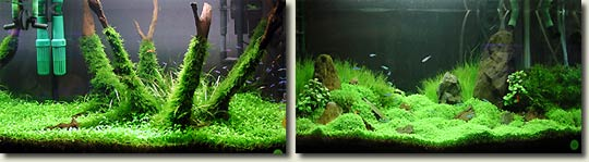 Aquascape Contest In Malaysia Aquapress Bleher