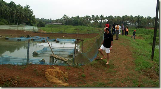 Ornamental fish farm of mr santhash baby aquapress bleher for Ornamental fish pond supplies