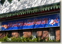 Dragon Aquarium in Toronto, Canada