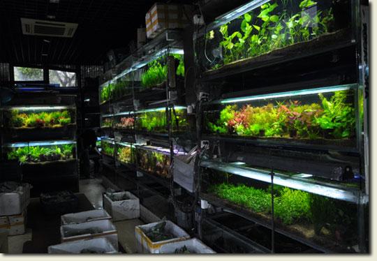 Shanghai aquarium shop aquapress bleher for Aquarium shop
