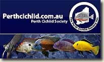 Conferenze al Perth Cichlid Society