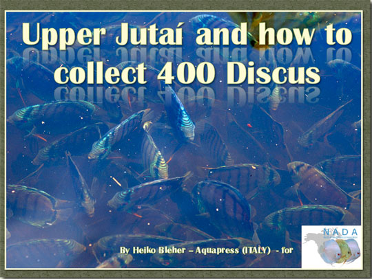 jutai-collected-web.jpg