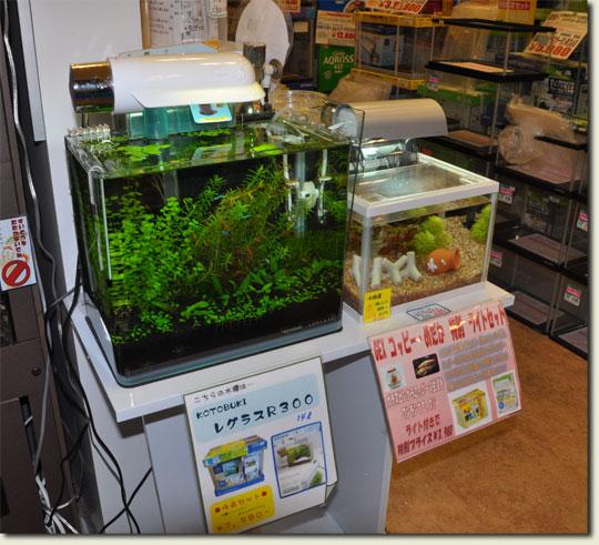 10.1537_china-sept.2010.jpg