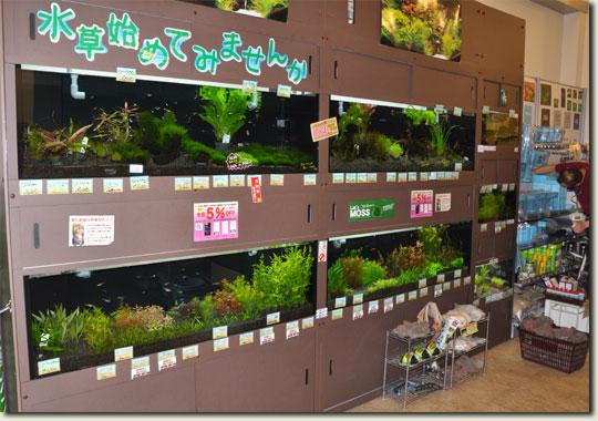 11.1535_china-sept.2010.jpg