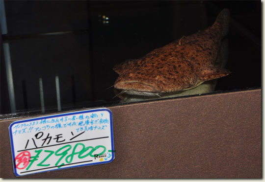 14.1524_china-sept.2010.jpg