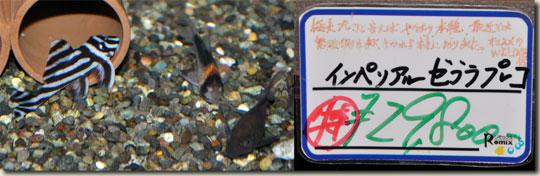 16-16a.1527_china-sept.2010.jpg