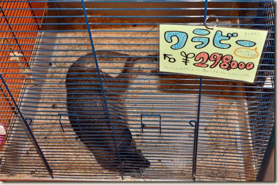 6.1519_china-sept.2010.jpg