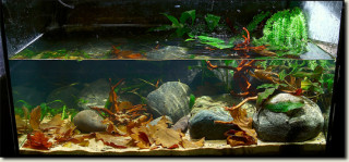 JBL Biotope Aquarium Competition 2012