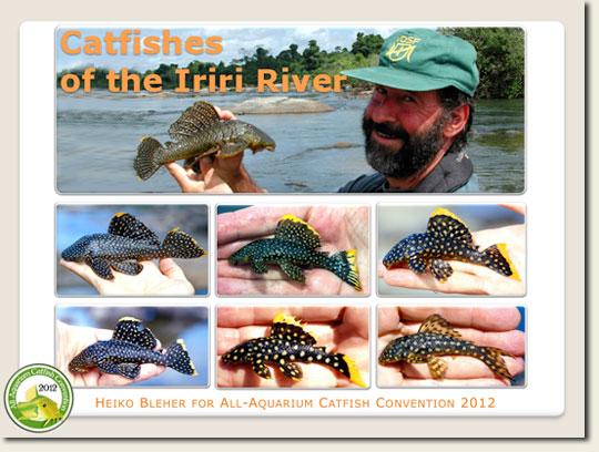 catfishes-of-the-iriri_web.jpg