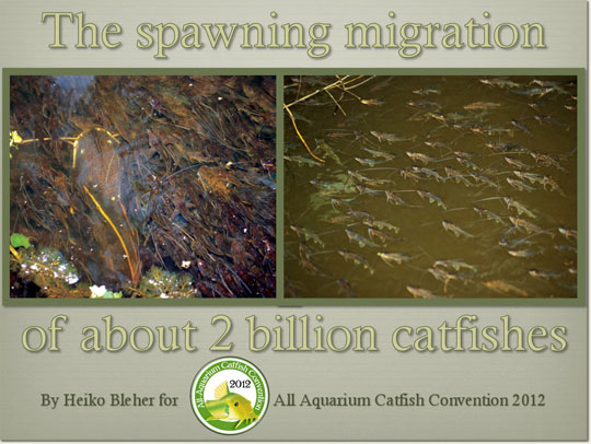 the-spawning-migration-of-540.jpg