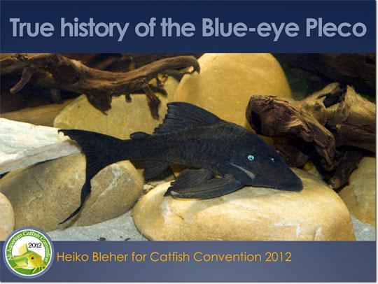 true-history-of-the-blue-eye-pleco_540.jpg