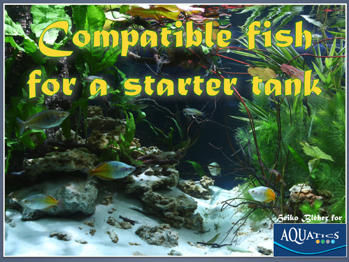 compatiblefishfortank.jpg