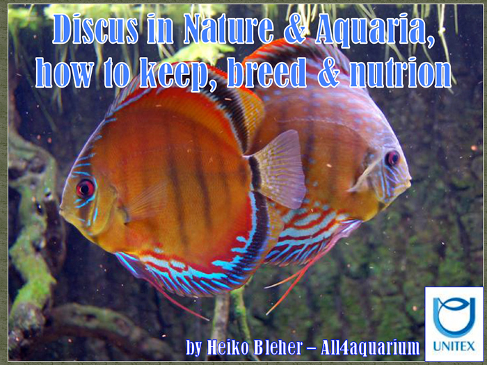 discus-in-nature--aquaria.jpg
