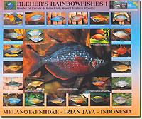 p-101805-Rainbowfishes_I_4a0be6aad6326.jpg