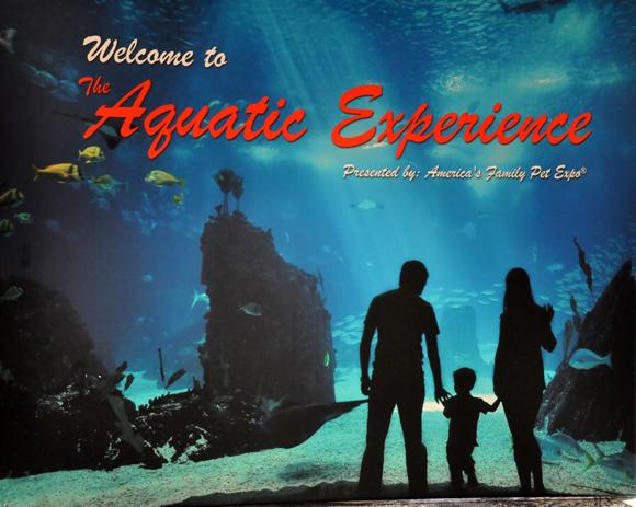 01 Aquatic-Experience-2013