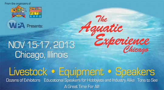 Aquatic Experience – Chicago 2013