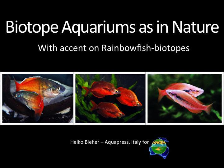 Raibofish-biotopes ANGFA 2013