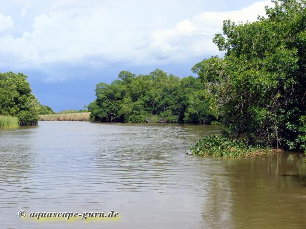 Bild3 pantano bassa