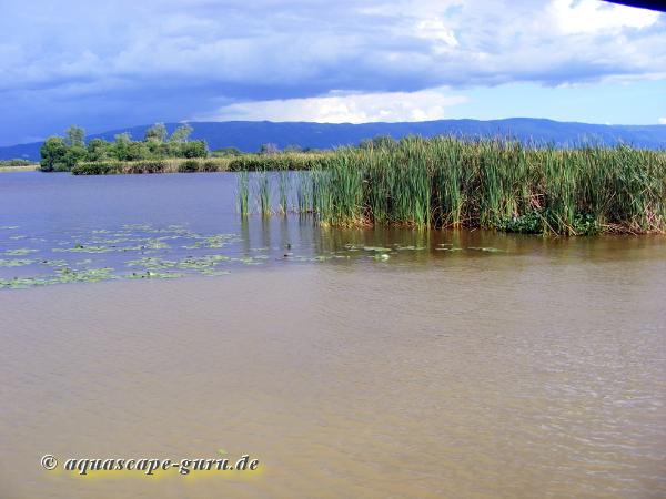 Bild4 grande pantano