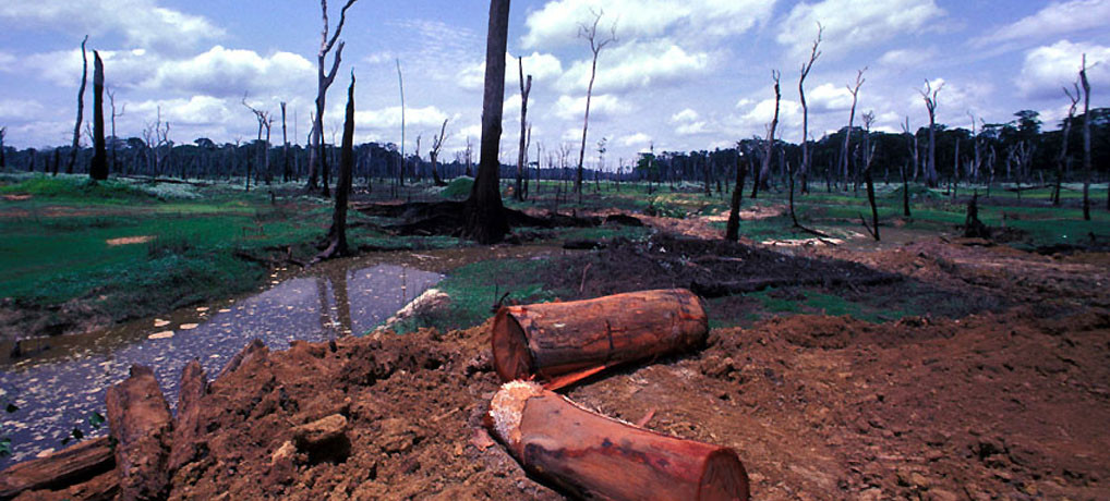 Deforestation in north-western Côte d'Ivoire