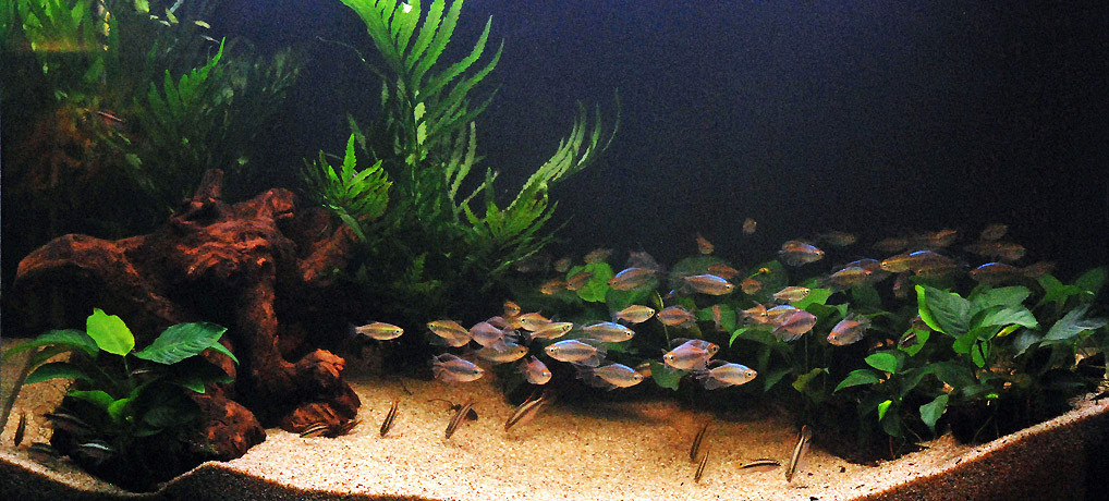 Biotope-aquarium from Moanda, Lower Congo, decorated at NAQ 2011
