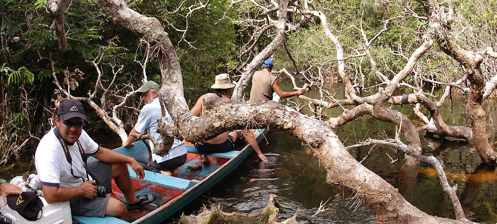 Rio Sauvaudaua, Upper Araca, Rio Negro region, Brazil