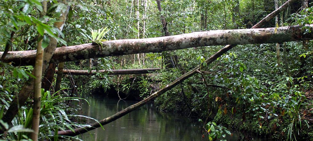 Jungle of Sungai Sin, Aru Archipelago, Indonesia