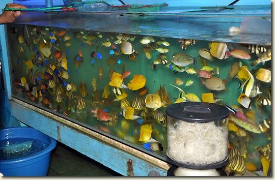 Cartimar Pet Center Manila Philippines Aquapress Bleher