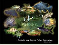 ANGFA 2011 Convention